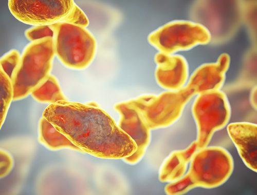 Bacteria Mycoplasma Genitalium